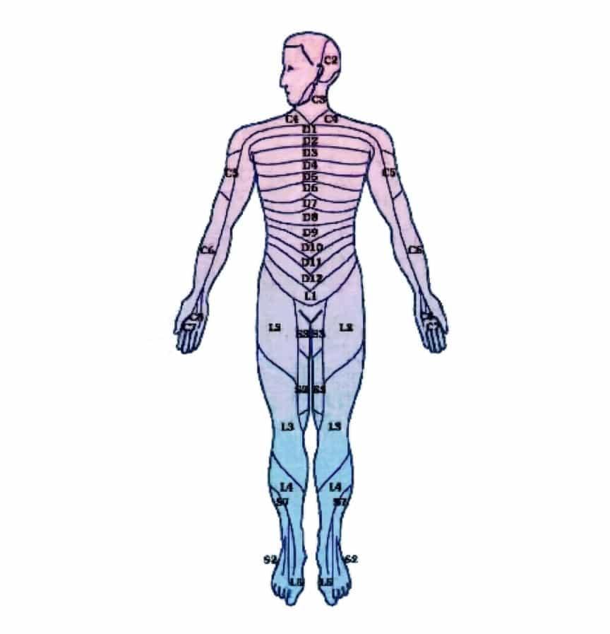 Neuropercusión - Partes del Cuerpo